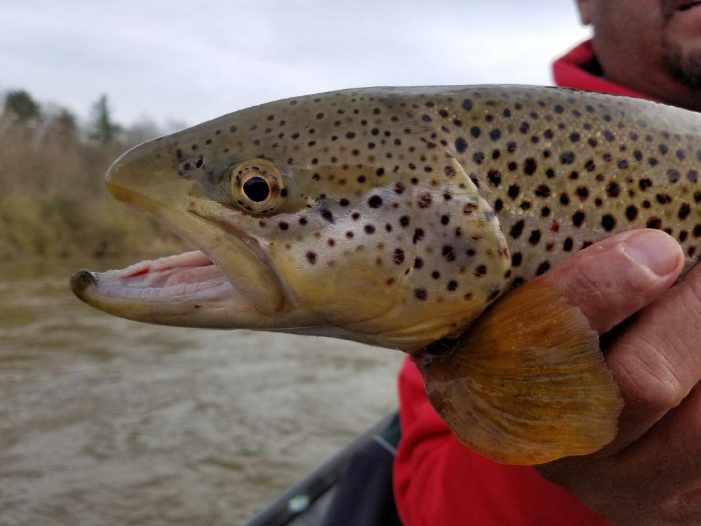 trout season 2017 northern michigan